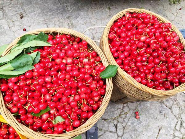 Cherries for Infused Baijiu Chinese Wine